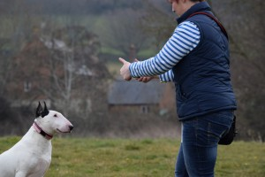 Kay 9 Dog Training - 121 Behaviour Classes