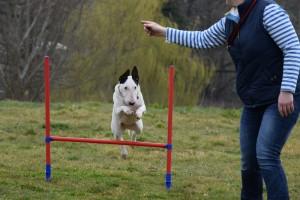 Kay 9 Dog Training - Fun Agility
