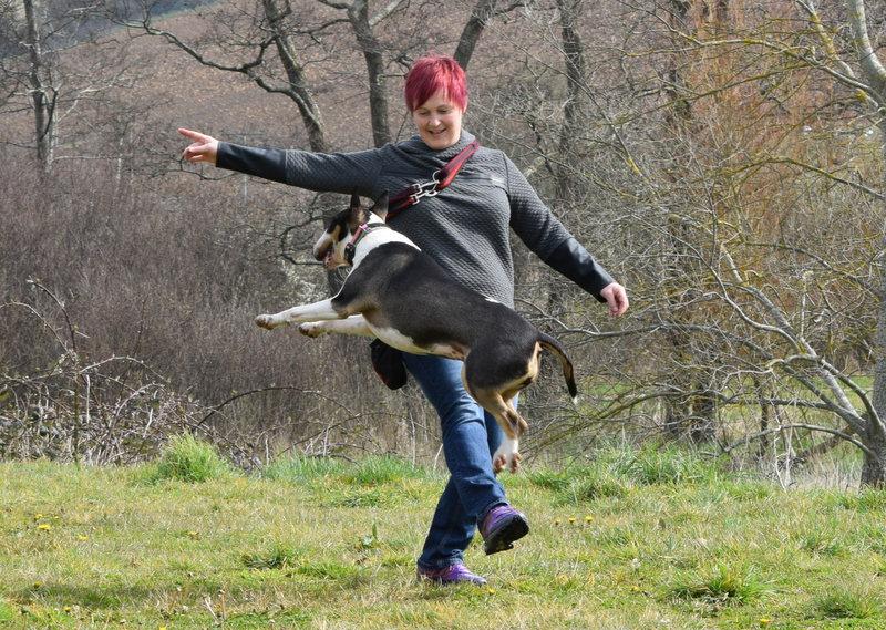 Kay 9 Dog Training
