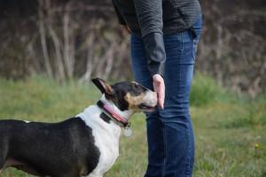 Kay 9 Dog Training - Mixed Ability Classes